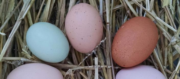 Multiple colored eggs on straw