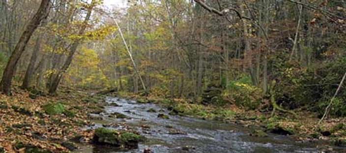Stream with wooded bank