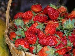 Photo of a basket of red strawberries.