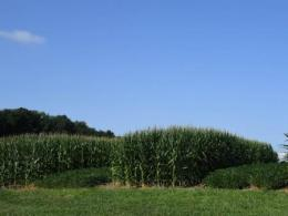 Corn and soybean research plots