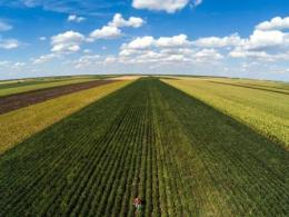 drone view of crop field with man walking between rows