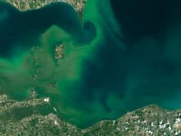 Photo of a western Lake Erie algal bloom in green-tinted water seen by satellite image.