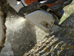 Photo of a chain saw cutting into a large log. Photo by I Stock.