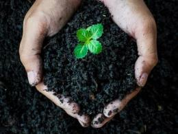 Photo of a person's hands cupped and full of dark soil with a small green plant emerging. Photo by I Stock.